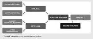 Flow chart describing how immunity develops in humans.